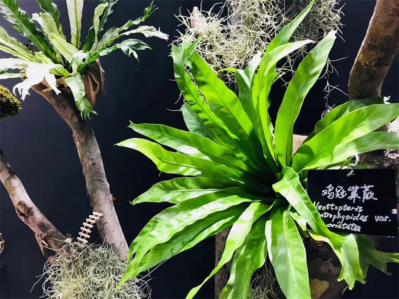 摆放可爱有趣的动物小品,让您感受被子植物绚丽多姿,细品阴生植物的