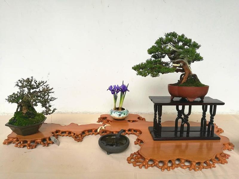 U:\信息报送\科普中心\2021年5月\活动预告丨上海植物园6月科普活动早知道\800\小微盆景.jpg
