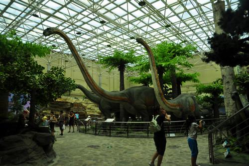 动物,植物和人类学等领域的标本收藏