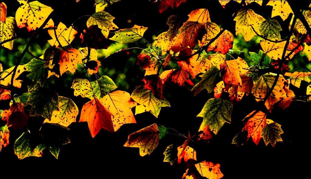 抓住秋天的尾巴 上海植物园秋景迷人